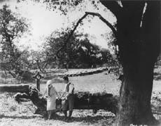 The Shamrock Handicap (1925)