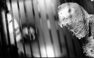 Max the parrot in The Parrot, an episode of the first of the First Person series